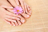 Care for beautiful woman skin and nails. Pedicure and manicure at beauty salon. Woman legs, hands with flower on bamboo. Spa therapy. Closeup photo of female feet with white french manicure, pedicure poster