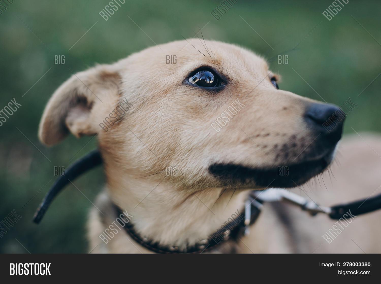 Portrait Cute Golden Image & Photo (Free Trial) | Bigstock