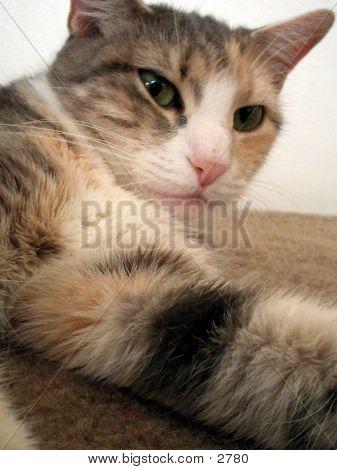 Close-Up Cat