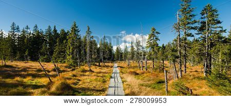 Wooden Pathway In Wild And Untouched Landscape With Trees And Peat