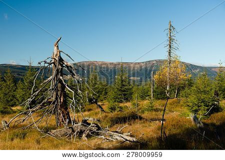 Dry Dead Trees In A Forrest Clearing With Mountains In The Background