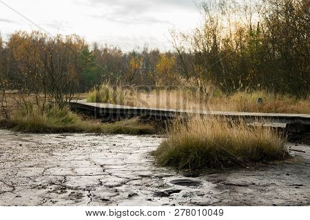 Wooden Pathway In Wild And Untouched Autumn Landscape With Birch Trees, Mud And Dry Grass