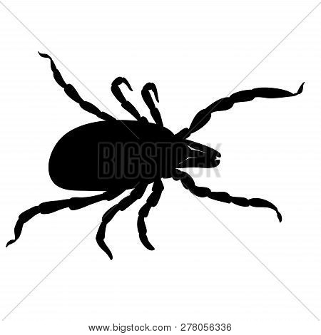 Mite Parasites. Tick Silhouette Isolated On White Background. Tick Parasite, Tick Insect. Sketch Of