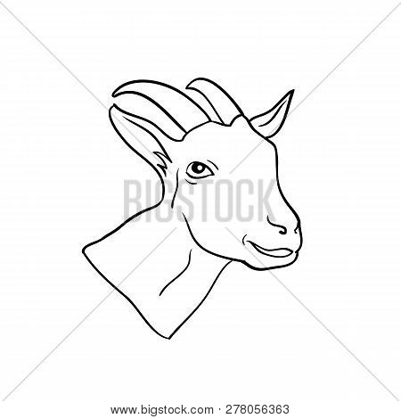Head Goat Isolated, Animal Drawn In Line