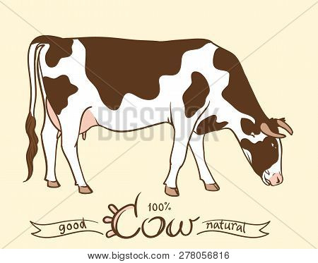 Cow. Cow Eating Grass. Cow Isolated, Set Of Elements