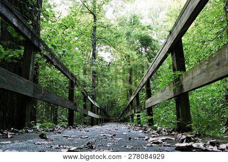 Walking Bridge On A Hike At Natchez Trace Parkway
