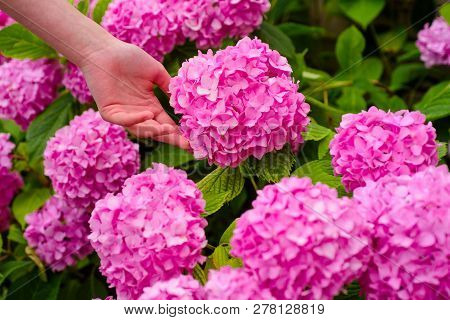 Gardener With Flowers. Woman Care Of Flowers In Garden. Perfect Hand Skin. Flower Care And Watering.