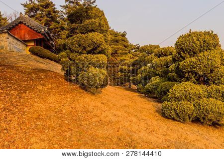 Sculpted Evergreen Trees On Hillside