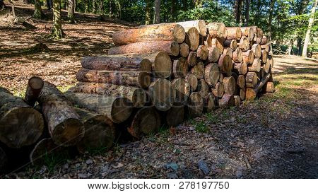 Pile Of Cut Three Trunks With Light And Shadow
