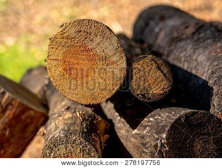 Cut Tree Branches On A Pile In Detail I.