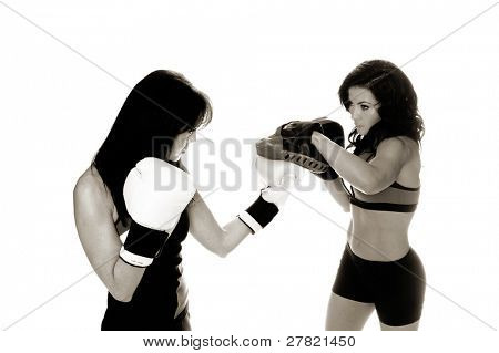 Two beautiful female boxers training on focus mitts