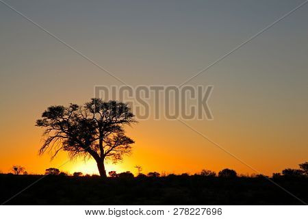 Sunset with silhouetted African thorn tree, Kalahari desert, South Africa