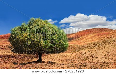 Lonely Green Argan Tree In The Middle Of The Desolating Valley In Morocco. Beautiful Northern Africa