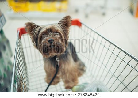 Cute Little Puppy Dog Sitting In A Shopping Cart On Blurred Shop Mall Background With People. Select