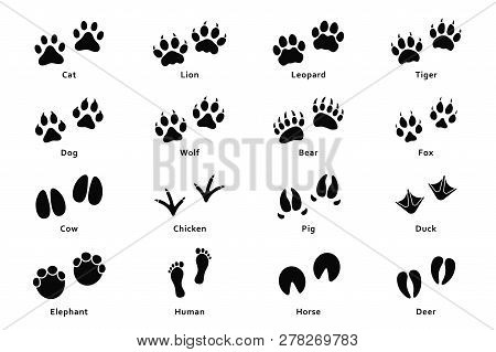 Animals Footprints, Paw Prints. Set Of Different Animals And Birds Footprints And Traces. Cat, Lion,