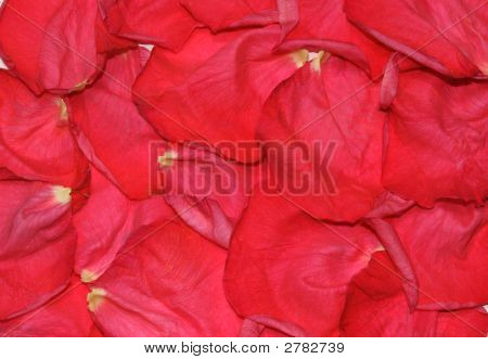 Rose-Leaves Background