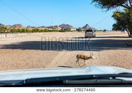Road to Safari Park on Sir Bani Yas Island, Abu Dhabi, United Arab Emirates poster