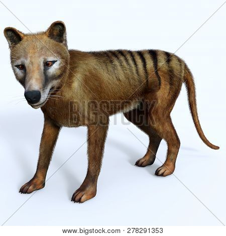 Thylacine Marsupial 3d Illustration - The Thylacine Marsupial Was An Extinct Predator From The Holoc