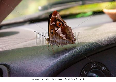 Aglais Io Or European Peacock Is A Colorful Butterfly Sitting On Car Dashboard. This Vibrant Butterf