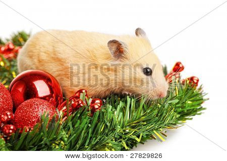 Hamster on fir branch isolated poster
