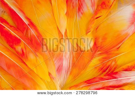 Multi Colored And Colorful Tropical Feather Background. Background From Feathers Of Tropical Birds.