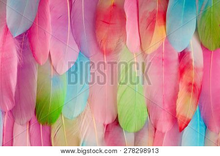 Multi Colored And Colorful Tropical Feather Background.background From Feathers Of Tropical Birds. B