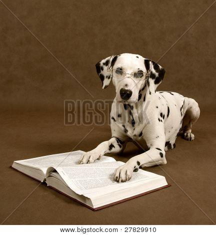 smart doggy