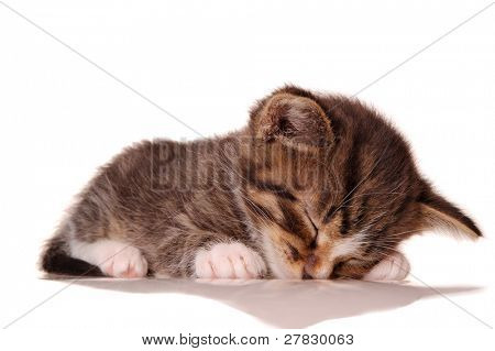 Sleep [with clipping path]