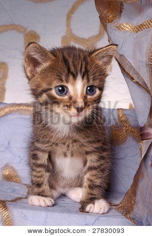 kitty in boudoir