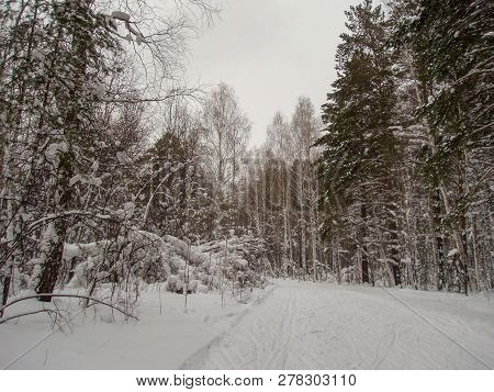 Snow Cold Temperature Tree Winter Plant Tranquility Covering Land Beauty In Nature Tranquil Scene No
