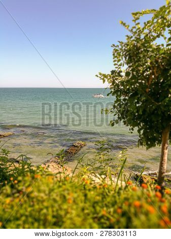 Water Sea Sky Clear Plant Beauty In Nature Land Horizon Scenics Over Tranquility Beach Tranquil Scen