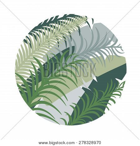 Round Tropical Background With Palm Leaves. Vector Image. Eps 10