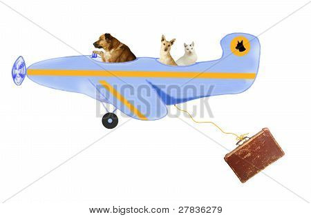 poster of Animals, two dogs and a tomcat,  on air travel