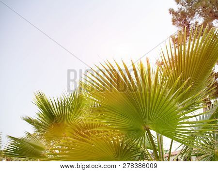 Tropical Beach Landscape With Palm Trees At Sunset. Paradise Design Banner Background. Vintage Effec