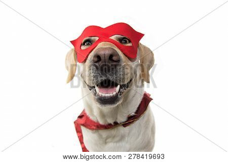 Dog Super Hero Costume. Labrador Close-up Wearing A Red Mask And A Cape.  Carnival Or Halloween. Iso