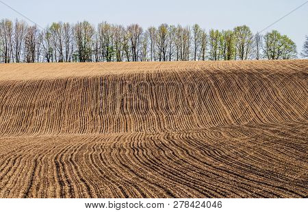 Early Spring. Plowed Field On A Hillside On The Background Of A Row Of Trees. Selective Focus.