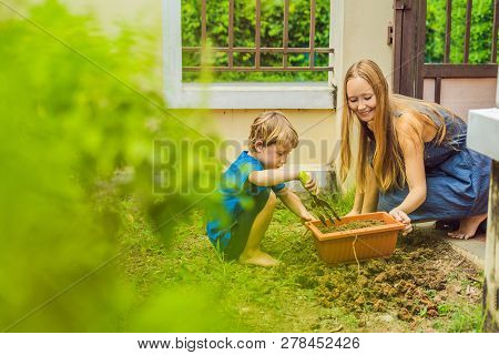 Beautiful Young Woman And Her Cute Son Planting Seedlings In Bed In The Domestic Garden At Summer Da