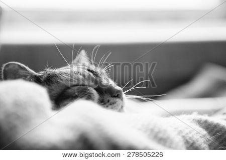 Cat, Cute, Animal, Pet, Feline, Kitten, Kitty, Adorable, Black And White, White, Relax, Comfortable,