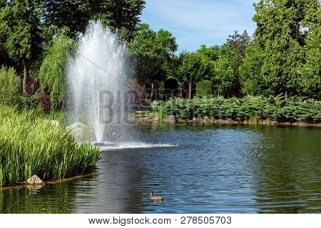 Decorative Pond With Floating Duck With Reeds And A Fountain On The Shore Landscaping Of The Shore W