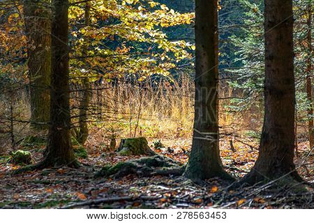 Colorful Idyllic Forest Scenery At Autumn Time