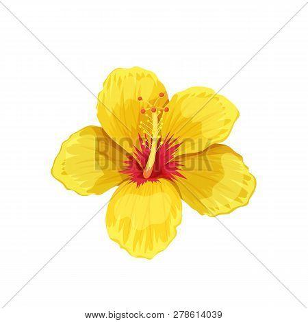 Hibiscus Tropical Vector Photo Free Trial Bigstock