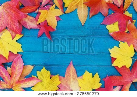 In Autumn, The Fallen Dry Leaves Of Yellow, Red, Orange Color Line The Perimeter Of The Frame On An