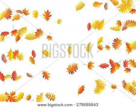 Oak, Maple, Wild Ash Rowan Leaves Vector, Autumn Foliage On White Background. Red Gold Yellow Wild A