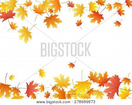 Maple Leaves Vector Background, Autumn Foliage On White Graphic Design. Canadian Symbol Maple Red Or