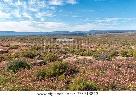 A Landscape With Purple Wild Flowers And A Dam Near Gannaga Lodge In The Tankwa Karoo Of South Afric