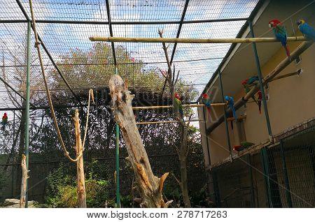 Istanbul, Turkey - October 20, 2018 - Parrots In Faruk Yalcin Zoo In Istanbul