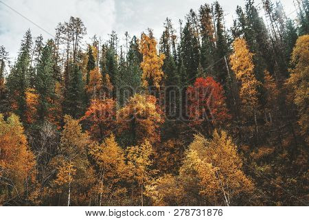 A Hillside In Taiga Overgrown With Plenty Of Autumn Colored Trees: Birches, Cedars, Pines, Firs Etc.
