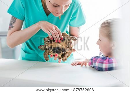 Girl looking at doctor examining turtle in veterinary clinic