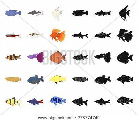 Different Types Of Fish Cartoon, Black Icons In Set Collection For Design. Marine And Aquarium Fish