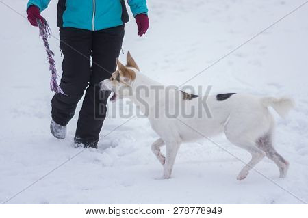 Master Playing With Mixed Breed Dog With Rope At Winter Season
